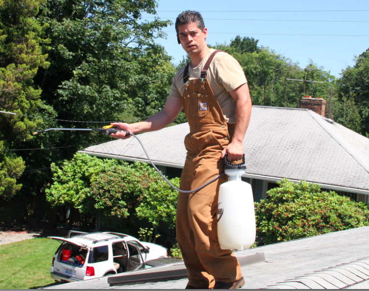 Seattle Roof Cleaning Idea Products And Organic Ways To